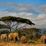 Südafrika Safari Hocheitsreise Flitterwochen - Elefanten