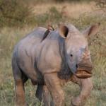 Südafrika Hotel buchen, Safari, Reise in Südafrika buchen