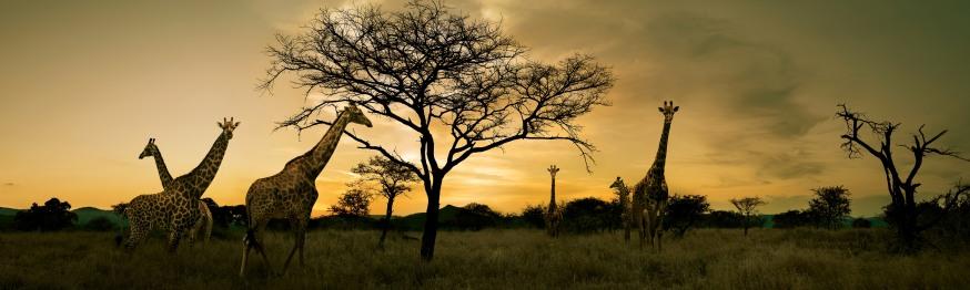 Abenteuer Südafrika Reisen - Unterkunft und Rundreisen Südafrika - Lodges Südafrika - Luxuszelt und Safaris - Ferien buchen