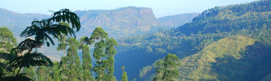 SriLanka Rundreise - Badeferien und Reisen - Sri Lanka