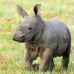 Südafrika Hotels buchen - Rundreise Südafrika - exklusive Lodges - Safari
