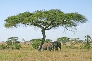 Tansania Reisen - Safari, Rundreise, Reise in Tanzania