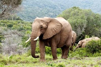 Kariega Gamereserve - Südafrika Safari Flitterwochen - Südafrika Rundreise