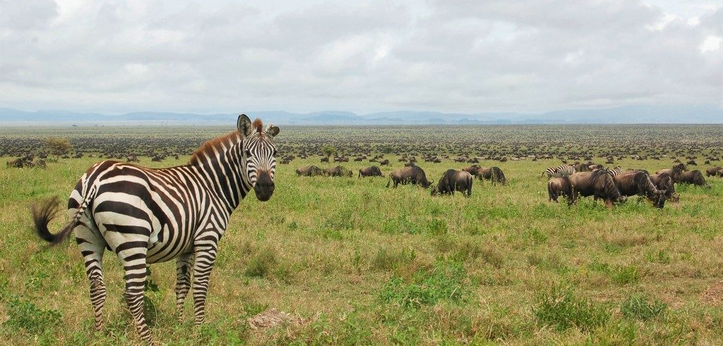 Rundreise Tansania - Tanzania Safari - Best of Tansania