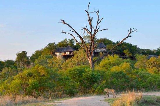 Leopard Hills Private Game Reserve, Südafrika