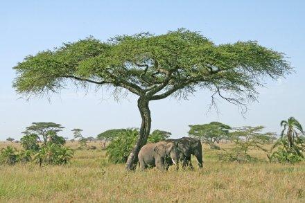 Best of Tansania