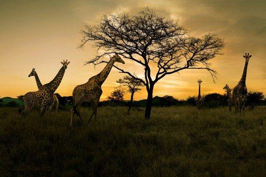 Erlebnis Südafrika