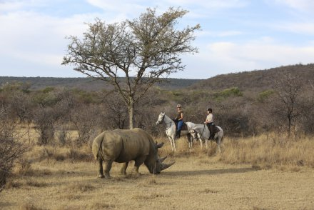 Reitsafaris in der Waterberg Region