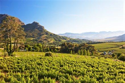 Weingebiet, 80km