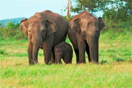 Polonnaruwa, Minneriya Nationalpark