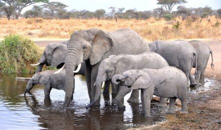 Lake Manyara Region – Serengeti Nationalpark