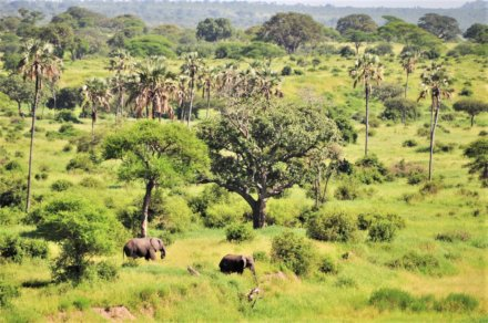 Arusha - Tarangire Nationalpark