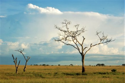 Serengeti Nationalpark