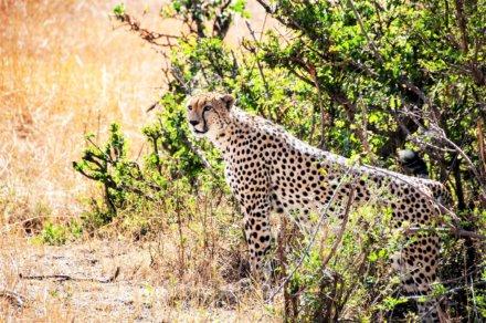 Serengeti Nationalpark – Lake Victoria