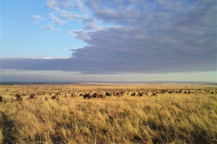 Lake Victoria – Masai Mara Region