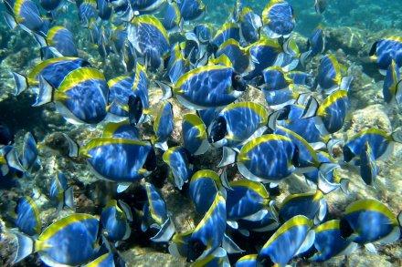 St. Anne Marine Park – Cocos Island - La Digue
