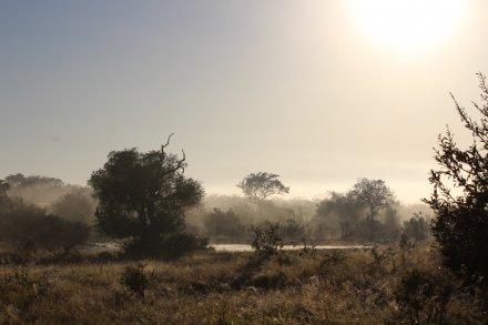 Kapama / Makalali Game Reserve